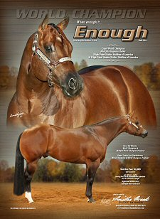 Enough (imp) AQHA